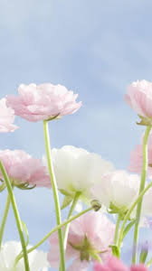 flower hd wallpaper iphone 6 plus 391