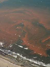 The dangers of a red tide