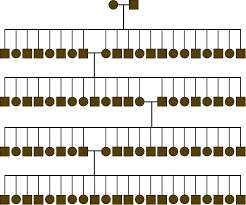 Eye Gene Chart Genetics Unit