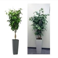 cheap office plants. Artificial Office Plants Trees Ideas Medium Size . Cheap O
