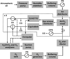 Gas Exchange Chart Schematic Gas Flow Diagram For The Arabidopsis O3 Exposure