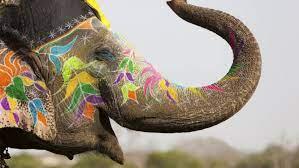 Wallpaper Elephant Festival, Elephant ...