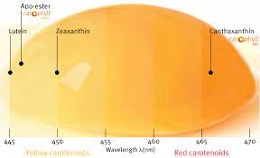 Egg Yolk Colour Chart Dsm Egg Yolk Pigmentation Guidelines Home Dsm Animal