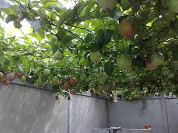 A Guide To Growing Healthy Fruit Trees  Encourage Plant GrowthAz Fruit Trees