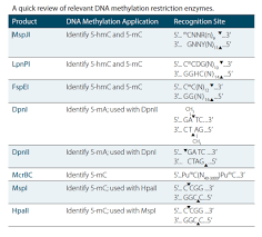 Restriction Enzyme Dna Methylation Enzymes