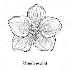 バンダ蘭の花は白い背景の上分離の概要を説明します着生植物南国の花夏デザインと塗り絵の輪郭のスタ