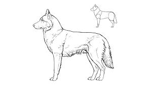 dog drawing. Delighful Dog Howtodrawdogsbreedshusky To Dog Drawing