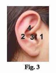 Ear Plug Size Chart How To Size Docs Proplugs Ear Plugs B T E Hear Aid