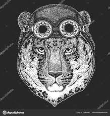 Divoká Kočka Leopard Cat O Mountain Panther Ruka Vykreslí Obrázek