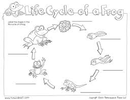 Stages of Frog Life Cycle Worksheet   Turtle Diary in addition Frog Life Cycle Worksheets   Mamas Learning Corner together with Life Cycle of a Frog   Upper Elementary Science   I   kwiz  Math additionally Life Cycle of a Frog Pictures Worksheet   Turtle Diary besides What We're Learning in June   Worksheets  Cycling and Plants in addition Label the Life Cycle of the Frog   PrimaryLearning org further The Paper Maid  Frog Life Cycle       pinterest moreover Pet   Frog life cycle sort activity   FREE Classroom Display furthermore 17 Best images about Life Cycles on Pinterest   Crafts  Wheels and further  likewise Life Cycle of a Frog   Science for Kids   The K8 School. on kindergarten frog life cycle worksheet