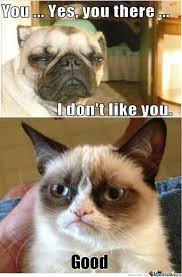 Funny-Angry-Cat via Relatably.com
