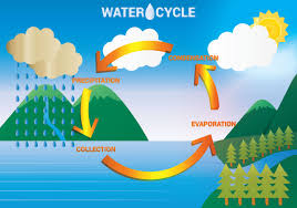 Water Cycle Diagram Free Vector Art 48 Free Downloads