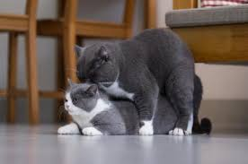 dogs and cats mating together. Perfect Cats Intended Dogs And Cats Mating Together