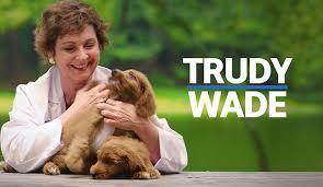 "NC State Senate ""Puppies"" TV Spot | Innovative Politics"