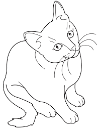 Small Picture Animal Coloring Pages Cat Coloring Coloring Pages