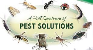 pest control killeen tx. Modren Control Pest Control Killeen Tx To Pest Control Killeen Tx