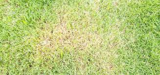 brown or yellow lawn patches