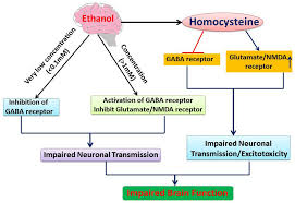 Alcohol Metabolism Chart Interaction Of Alcohol With Receptors This Flow Chart