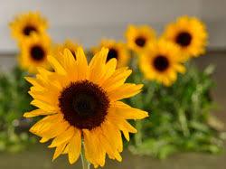 Ingles Floral Floral