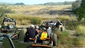 Image result for Gypsy Safari In Ranthambore