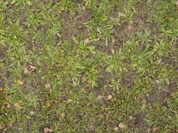 dirt grass texture seamless. Forest Ground Texture With Dry Leaves In Long Tufts Of Mixed Grass. Dirt Grass Seamless