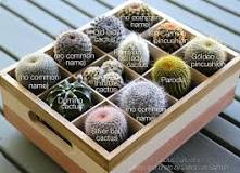Image result for types of cactus plants