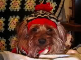 Crochet Dog Hat Pattern Fascinating Ravelry Knit And Crochet Dog Hats Patterns