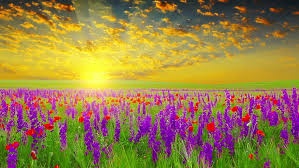 Field of Spring Flowers at : Video de stock (totalmente libre de regalías)  3624398 | Shutterstock