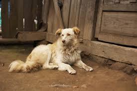 Be Safe Around Animals Travelers Health Cdc
