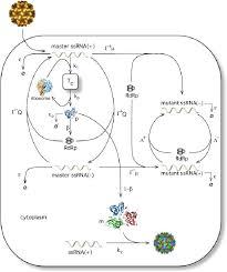 Lytic And Lysogenic Cycle Venn Diagram Diagram Of Infection Technical Diagrams