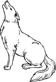 Small Picture Coyotes Howling in Desert Animal Colouring Pages Pinterest
