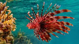 Live fish wallpaper for desktop ...