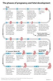 Babycenter Milestone Chart Baby Growth Flow Charts