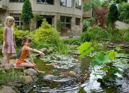 pond plants that survive the winter