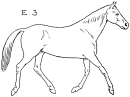 trotting horse drawing. Beautiful Trotting Now Just Draw  To Trotting Horse Drawing How To Draw