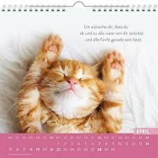 Kalender Einfach Mal Abhängen 2019 Katzekatzensprüchefotografie