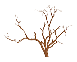 Shape Of Spooky Dead Tree Branches