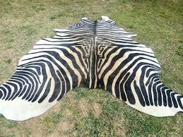 white beige zebra print printed cowhide skin rug steer cow hide uk