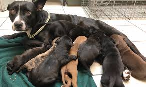 Winter & Her Puppies: An Incredible Rescue Tale – Humane Society Tampa Bay