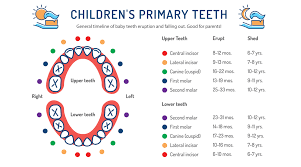 5 Differences Between Baby Teeth And Permanent Teeth Justa