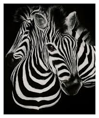 hd prints oil painting on canvas zebra head art wall decoration 12x16inch abstract