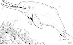 Small Picture Baiji river dolphin coloring page Free Printable Coloring Pages