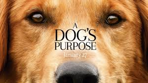 a dog s purpose book cover.  Cover A Dogu0027s Purpose Book And New Movie Coming In 2017 To Dog S Purpose Cover R