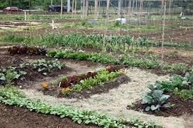 Kitchen Garden Preserves Fafardorganic Gardening Fafard