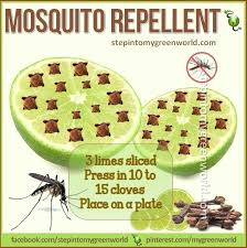 homemade mosquito spray best natural lime and clove mosquito repellent step into my green world homemade homemade mosquito spray