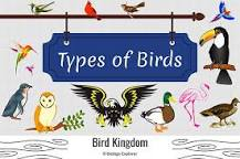 Image result for How many different birds are there?