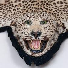 leopard skin rug faux animal skin rugs with head antique leopard skin rug
