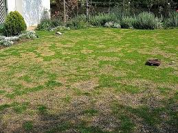 Jack   CC s Pee Pit Pinterest How To Use Pee In Your Garden