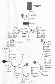 Реферат Механизмы дыхания растений com Банк  Механизмы дыхания растений
