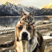 Henry and Baloo: Dog and cat travel companions gain cult following - BBC News